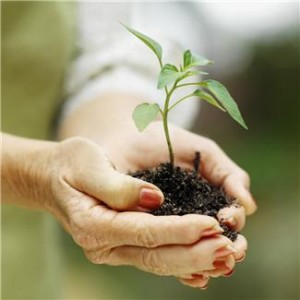 ladies hands holding soil and a small plant